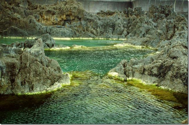 Eau naturelle versus eau contaminée